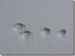 小動物の足跡発見