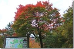 大石ダム付近の紅葉