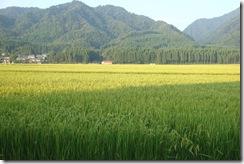 2010/8/23田園風景