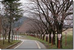 高瀬の桜堤