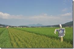 関川村の田園風景