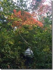 色づく木々…